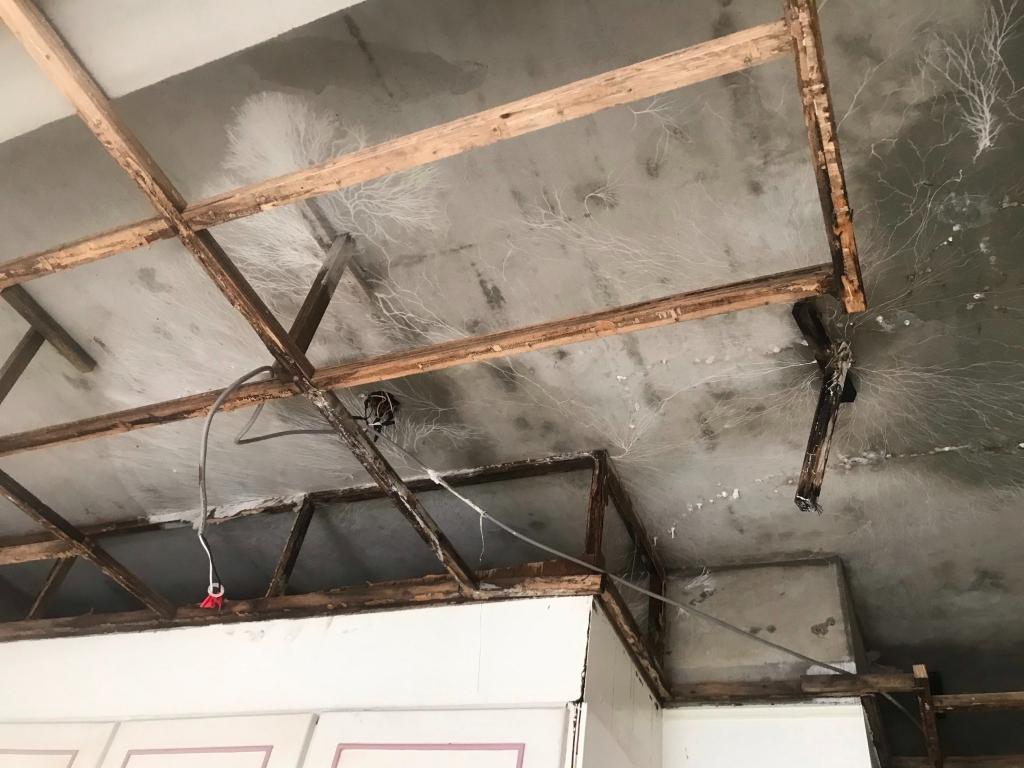 麻豆區興國路-浴室排水管及防水層