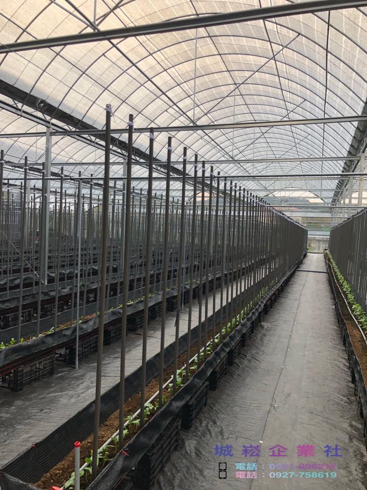 埔里-徐先生-荖葉場-簡固型溫室