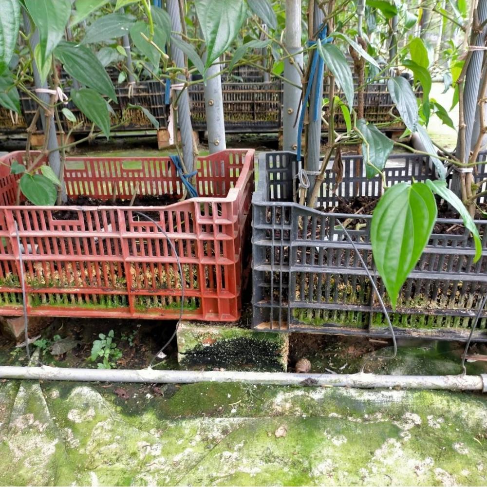 灌溉自動化設備