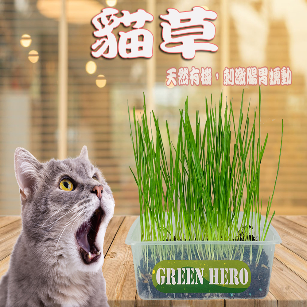 貓草-混合包3入