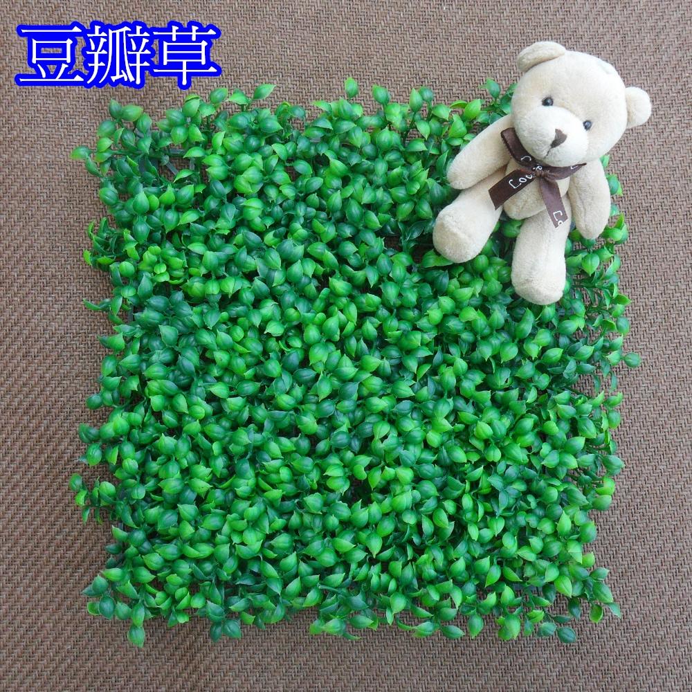 豆瓣草 草皮-1個