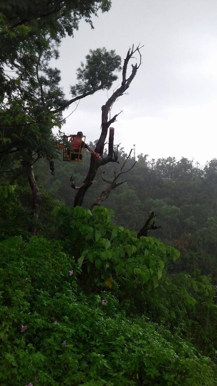 樹木修剪&危樹處理