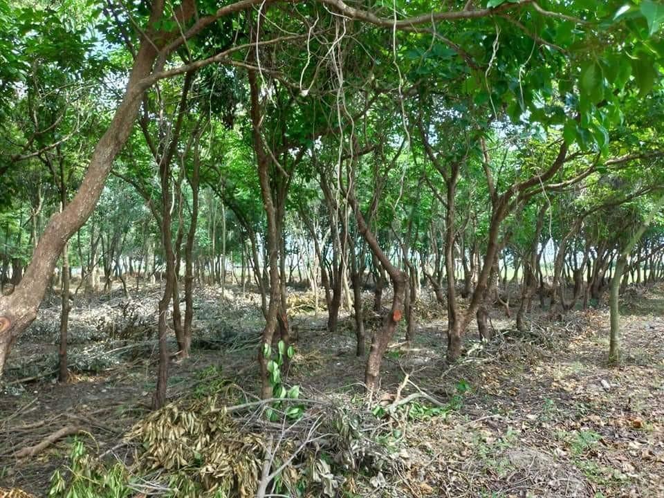 造林 撫育
