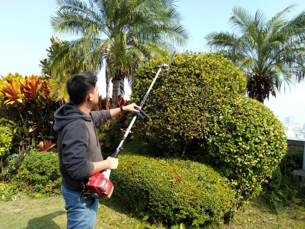 中庭綠地養護工程-植栽養護