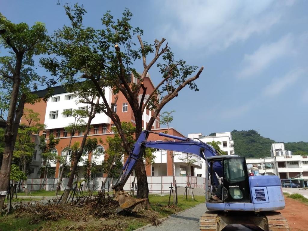 中庭綠地養護工程-樹木移植