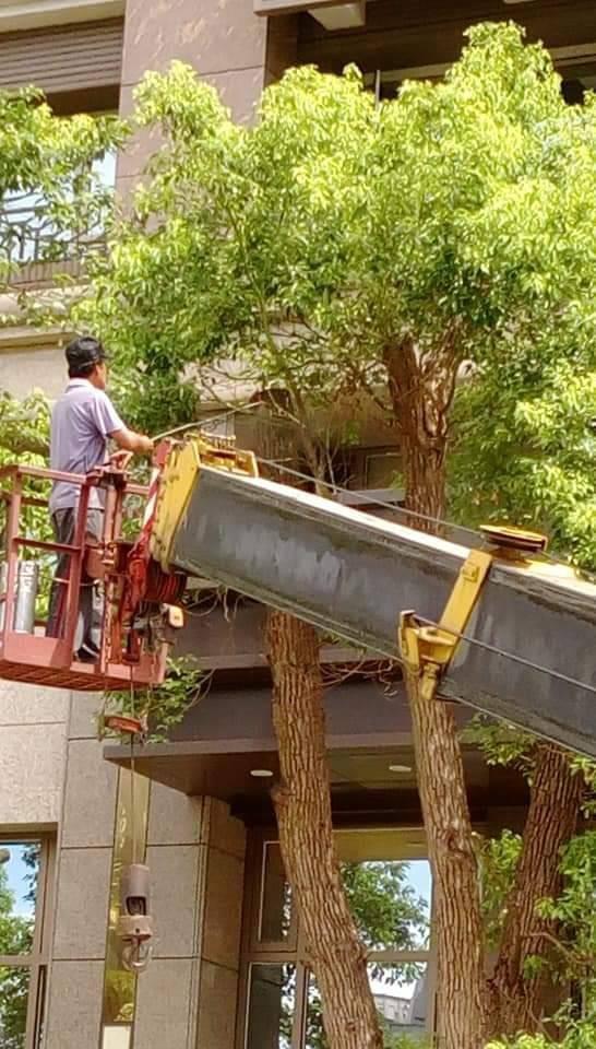 大樹木修剪