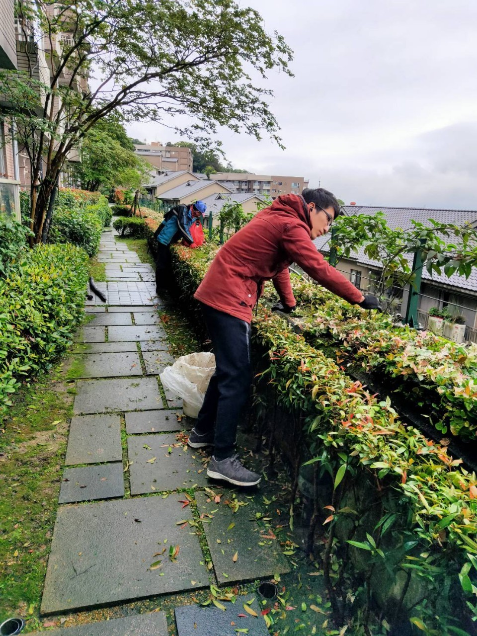 花木、植物修剪
